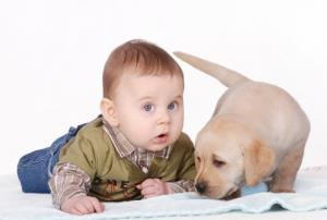 Having a dog around may help babies avoid infection, a study suggests.
