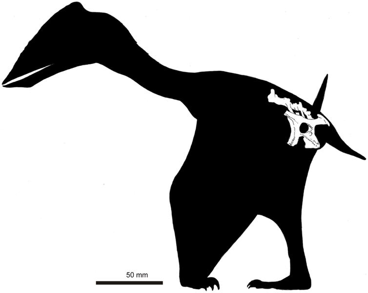 Niña de 5 años encuentra un dinosario en la playa