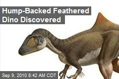 Hump-Backed Feathered Dino Discovered