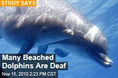 Beached Dolphins Often Deaf: Study Shows Dolphins With Hearing Loss May Be Getting Lost, Going Hungry