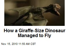 How a Giraffe-Size Dinosaur Managed to Fly