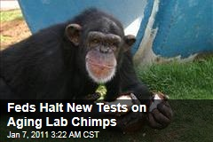 Alamogordo Chimps: Aging Lab Animals Get Reprieve From More Tests