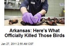 Ark.: Fireworks Killed Birds, We Don't Know About Fish