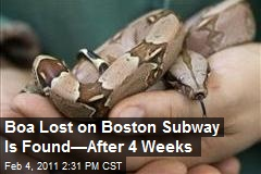 Boa Lost on Boston Subway Is Found—After 4 Weeks