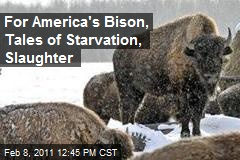 For America's Bison, Tales of Starvation, Slaughter