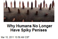Why Humans No Longer Have Spiky Penises