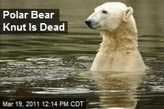 Polar Bear Knut Is Dead