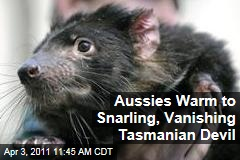 Tasmanian Devil, Once Reviled, Wins Hearts in Australia as Extinction Looms