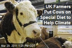 UK Farmers Put Cows on Special Diet to Help Climate