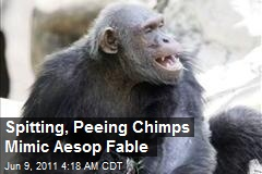 Spitting, Peeing Chimps Mimic Aesop Fable