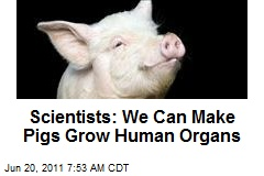 Scientists: We Can Make Pigs Grow Human Organs