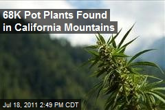 68K Pot Plants Found in California Mountains