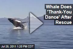 Whale Does 'Thank-You Dance' After Being Rescued From Fishing Nets