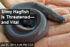 Slimy Hagfish Is Threatened— and Vital