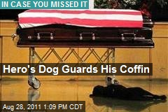 Hero&amp;#39;s Dog Guards His Coffin