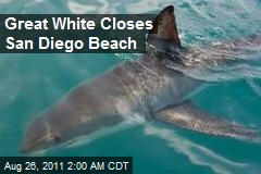 Great White Closes San Diego Beach