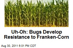 Uh-Oh: Bugs Develop Resistance to Franken-Corn