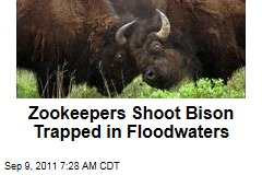 Zookeepers Shoot Bison Trapped in Floodwaters