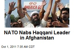 NATO Nabs Haqqani Leader in Afghanistan