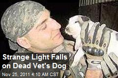 Strange Light Falls on Dead Vet's Dog