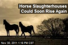 Horse Slaughterhouses Could Soon Rise Again