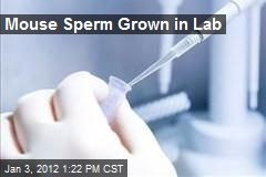 Mouse Sperm Grown in Lab