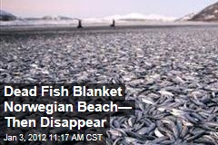 Dead Herring Blanket Beach in Norway Then Disappear
