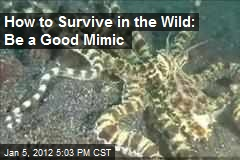 How to Survive in the Wild: Be a Good Mimic