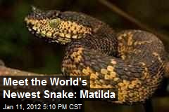 Meet the World's Newest Snake: Matilda