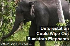 Deforestation Could Wipe Out Sumatran Elephants