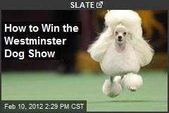 How to Win the Westminster Dog Show