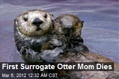 First Surrogate Otter Mom Dies