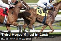 Third Horse Killed in Luck