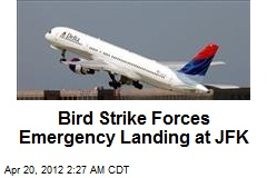 Bird Strike Forces Emergency Landing at JFK