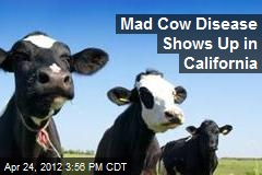 Mad Cow Disease Shows Up in California