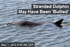 Stranded Dolphin May Have Been 'Bullied'