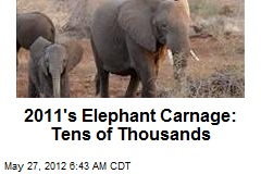 2011&amp;#39;s Elephant Carnage: Tens of Thousands