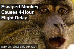 Escaped Monkey Causes 4-Hour Flight Delay