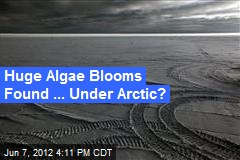 Huge Algae Blooms Found ... Under Arctic?