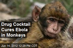 Drug Cocktail Cures Ebola in Monkeys
