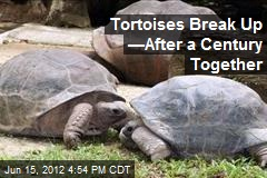 Tortoises Break Up &amp;mdash;After a Century Together