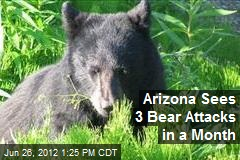 Arizona Sees 3 Bear Attacks in a Month