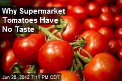 Why Supermarket Tomatoes Have No Taste