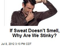 If Sweat Doesn't Smell, Why Are We Stinky?