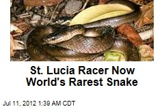 St. Lucia Racer Now World&amp;#39;s Rarest Snake