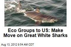 Eco Groups to US: Make Move on Great White Sharks