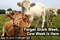 Forget Shark Week, Cow Week Is Here