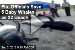 Fla. Officials Save 5 Baby Whales as 22 Beach