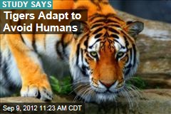 Tigers Adapt to Avoid Humans