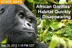 African Gorillas' Habitat Quickly Disappearing